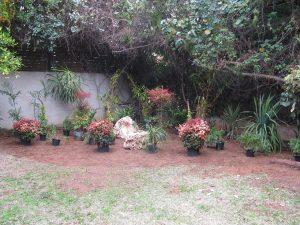 סידור הצמחים והסלעים