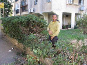 גיזום שיחים ועצים מיותרים בגינה