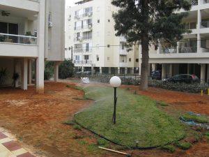 יישור השטח, סידור מערכת השקייה , ןשתילת דשא מסוג דרבן