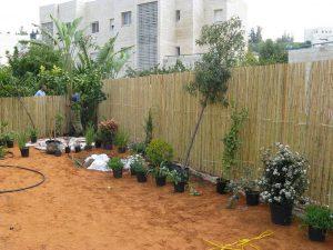 בחירת צמחים ומיקומם בגינה