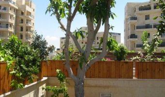 הקמת גינת אדניות עץ לגג