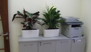 עציצים הידרופונים למשרד
