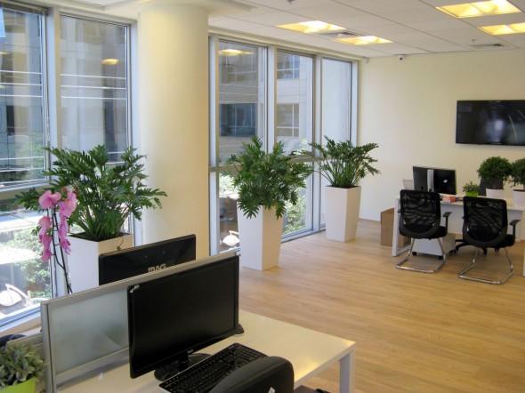 עציצים למשרד הרצליה פיתוח