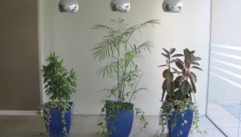 עציצי גלזורה ללובי בית משותף בתל אביב