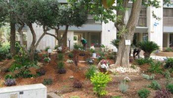 עיצוב גינה בית משותף בתל אביב